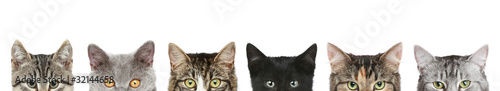 Photo  Cat's half heads on a white background