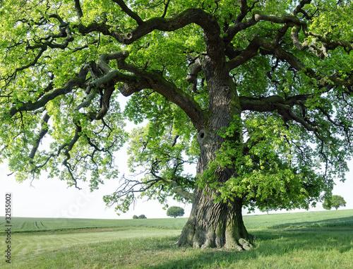 Fototapeta drzewa   samotne-drzewo