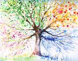 Drzewo czterosezonowe - 32172228