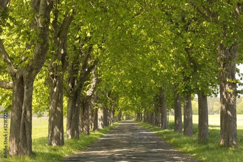 Photo Kastanien säumen eine Landstrasse