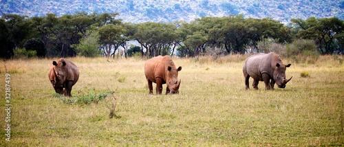 Fotobehang Neushoorn Rhino Trio
