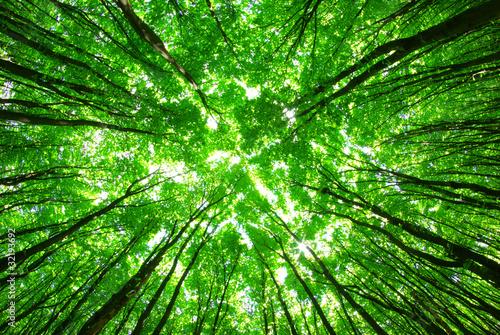 Fototapeten Wald green forest