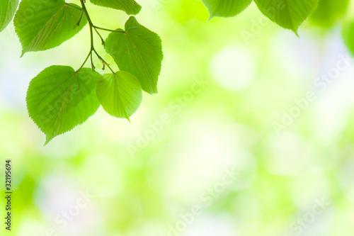 Fototapety, obrazy: Spring green leaves in soft sunlight