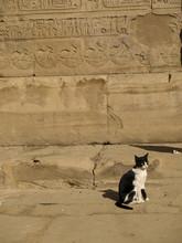 Temple Cat At Edfu In Egypt , Dedicated To God Horus