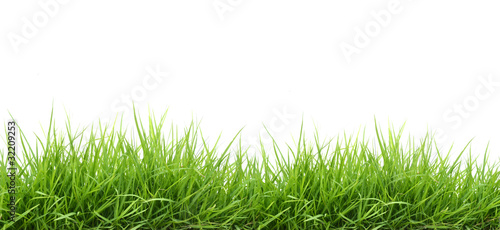 Obraz fresh green grass - fototapety do salonu