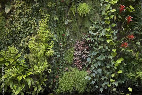 Mur végétal 4911