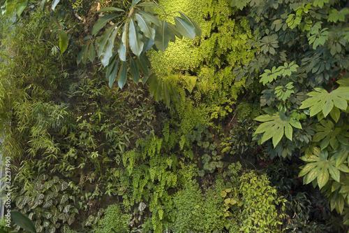 Mur végétal 4914