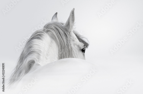 Photo  Andalusian horse in a mist
