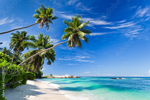 Obraz Kokosowe palmy przy plaży na Seszelach - fototapety do salonu