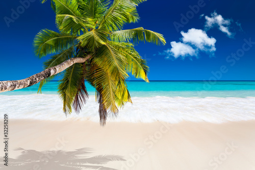 Fototapeta tropiki palma-kokosowa-na-bialej-plazy