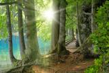 Fototapeta Natura - Sonnenschein im Wald neben klarem See