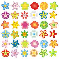 Paczka kolorowych kwiatów (12 rodzajów kwiatów)