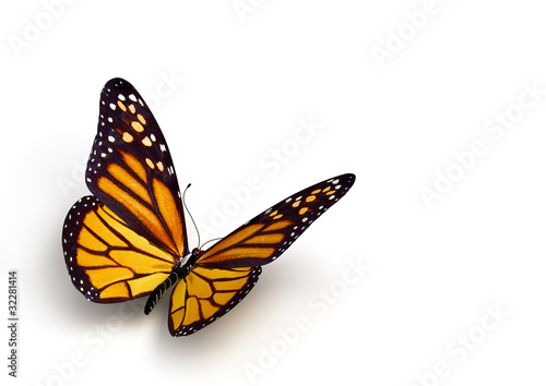 La pose en embrasure Papillon butterfly