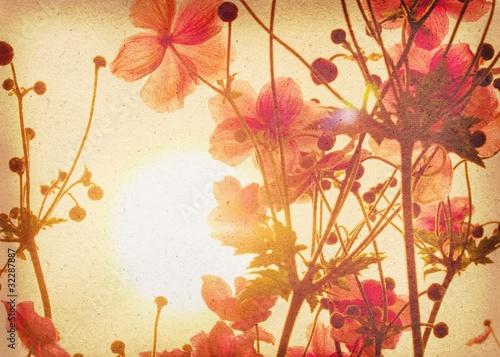 Foto-Lamellen - Anemone