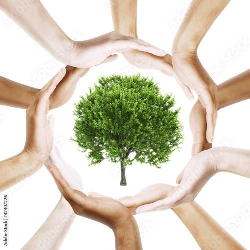 Fototapeta Tree with multiracial human hands around it obraz na płótnie