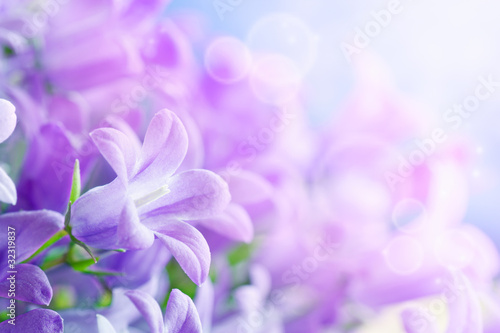 Spoed Foto op Canvas Lilac Flower background