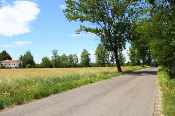 Fototapeta na wymiar Strada di campagna, Parco delle Groane