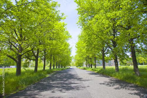 Fotografiet  新緑の並木道