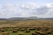 Pen-y-Ghent Across Moorland Landscape In Yorkshire Dales