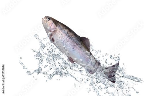 Valokuva  Fische 129