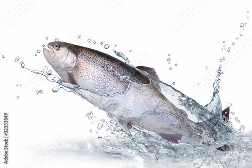 Valokuva  Fische 137