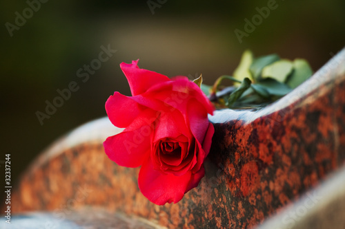 Rose on the tombstone Wallpaper Mural