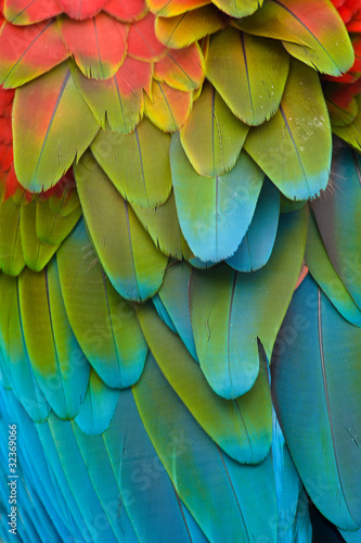 Colorful Macaw Plumage Canvas Print
