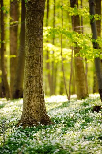 Naklejka dekoracyjna Waldboden im Frühling 4