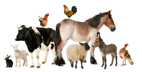 Panel Szklany Zwierzęta Variety of farm animals in front of white background