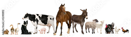 Poster Paarden Variety of farm animals in front of white background