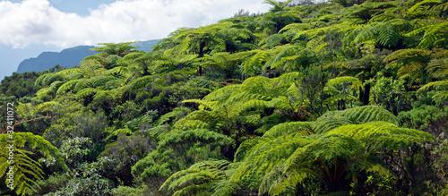 Naklejki dżungla  nad-koronami-drzew-w-dzungli