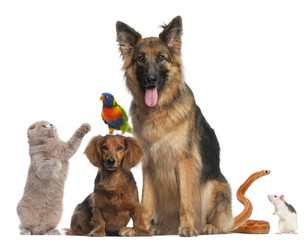 FototapetaGroup of animals in front of white background
