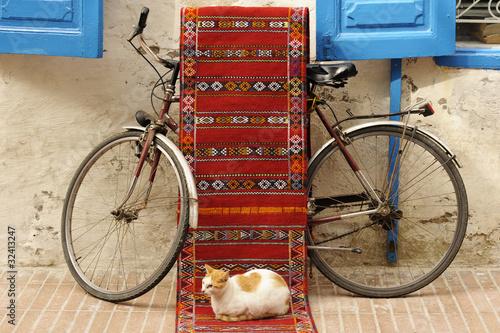 Foto op Canvas Marokko Gatto nei vicoli di Essauira