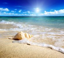 Seashell On The Beach (shallow DOF)