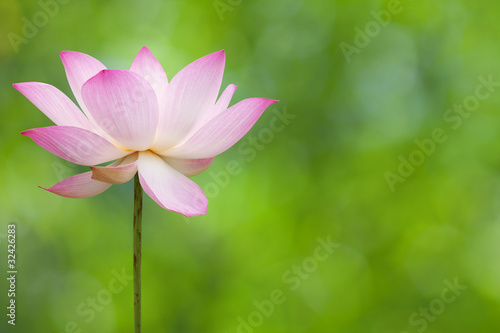 Foto op Canvas Lotusbloem Lotus blossom