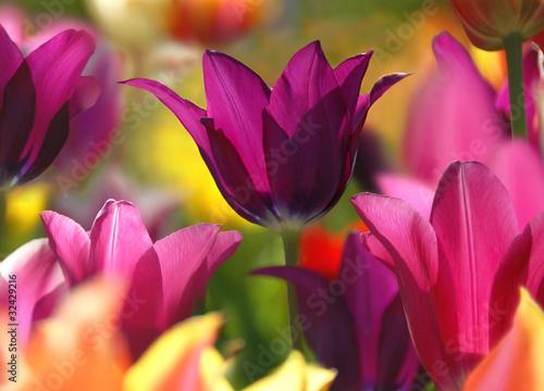 Obraz Wiosenne piękno - fototapety do salonu