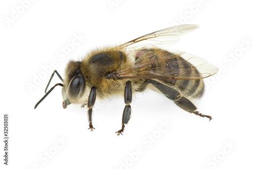 Recess Fitting Bee Honey bee