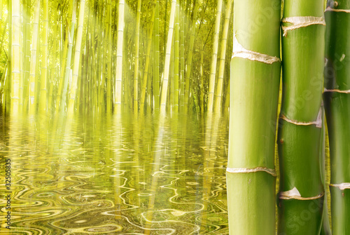 Plakaty Dżungla azjatyckie-srodowisko-z-bambusowymi-laskami