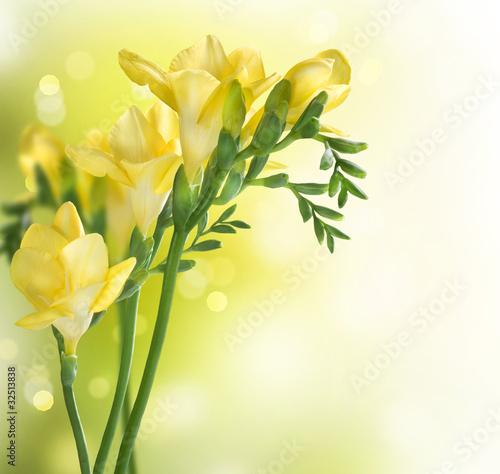 projekt-obramowania-freesia-flowers