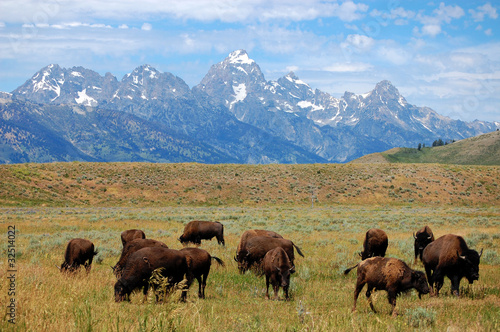 Buffalo Plain Along Mountain Range