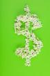 Leinwandbild Motiv Dollar sign made of white white flowers