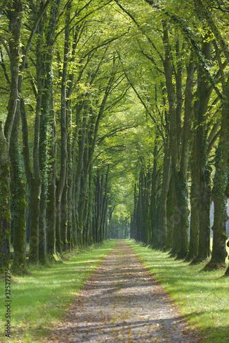 aleja-drzew-alei