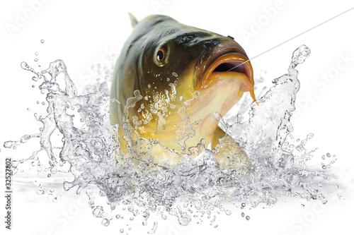 Valokuva  Fische 102