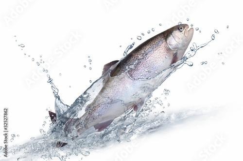 Valokuvatapetti Fische 135