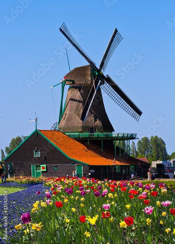 Fotografie, Obraz  windmill in holland