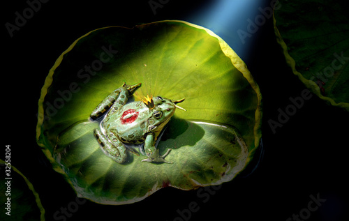 Tuinposter Kikker Prince frog in the spotlight