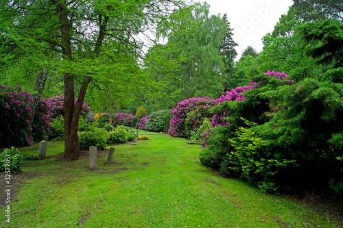 Papiers peints Jardin Park mit Rhododendronsträucher