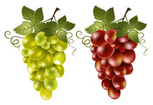 Red And Green Grape