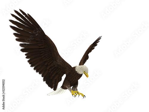 In de dag Eagle american bald eagle hunting different angle