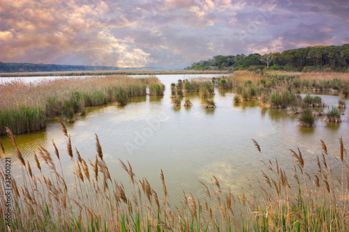 Fototapeta marshland